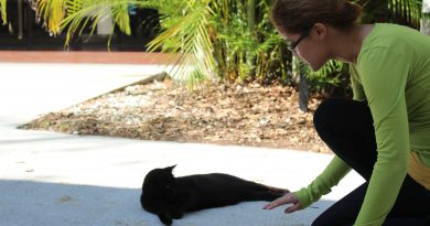 Caroline Barjon-Ramos attempting to pet a cat.
