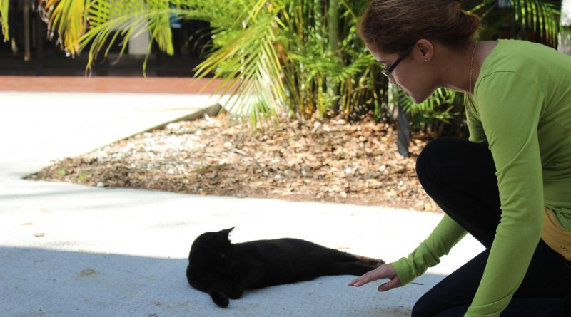 Caroline Barjon-Ramos attempting to pet a cat.