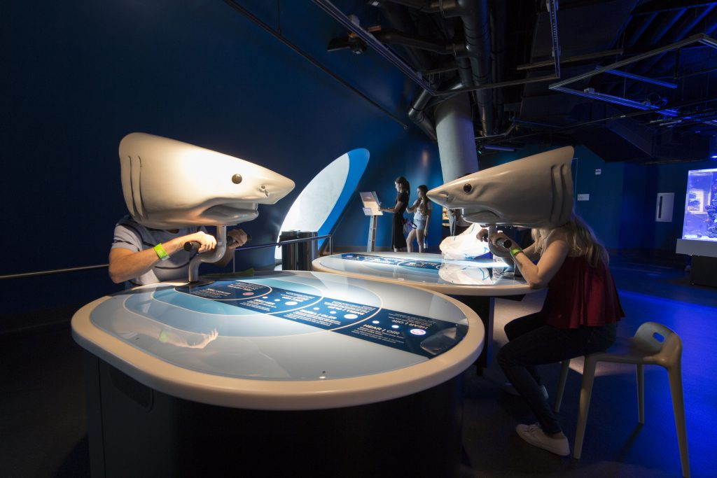 Visitors learning about sharks' sensory.