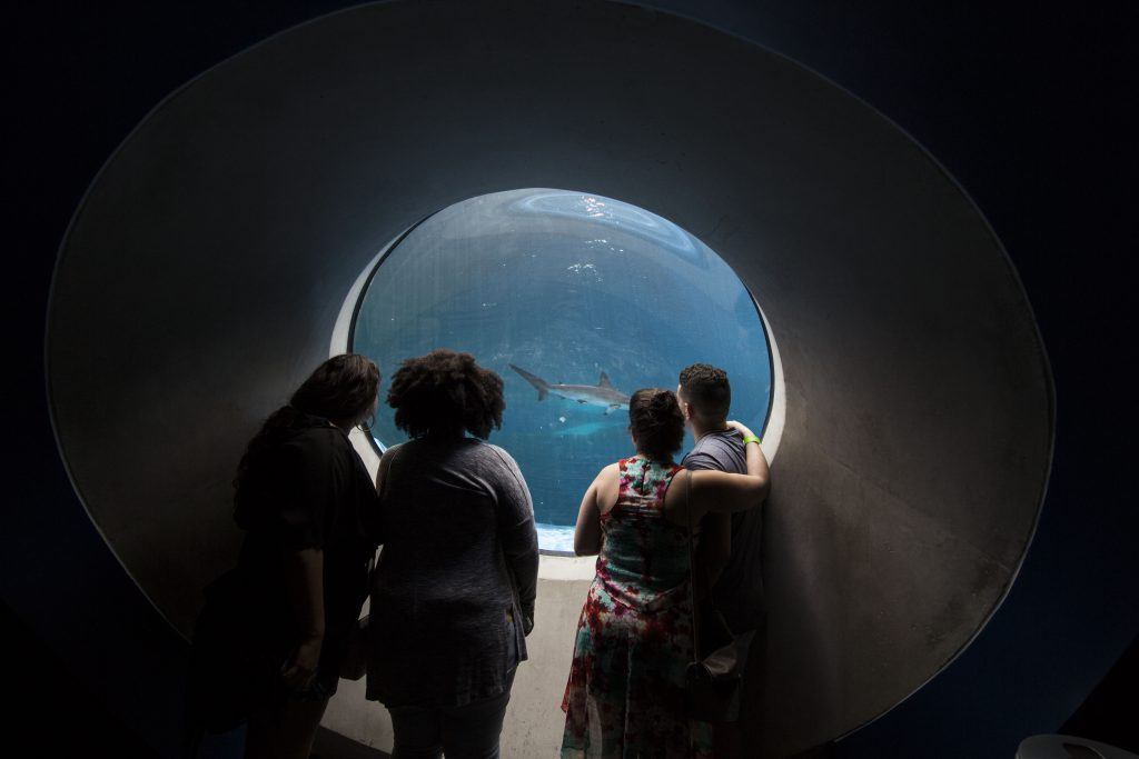 Visitors looking at the sharks.