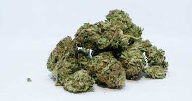 Image of marijuana.