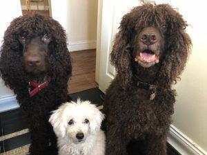 Professor Lisa Shaw's Pets