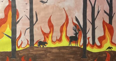 Wildfires illustration by Carolina Soto.