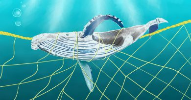 Environment illustration.